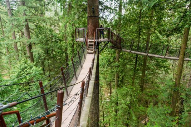 ein baum top gehweg an der capilano suspension bridge park - baumwipfelpfad stock-fotos und bilder