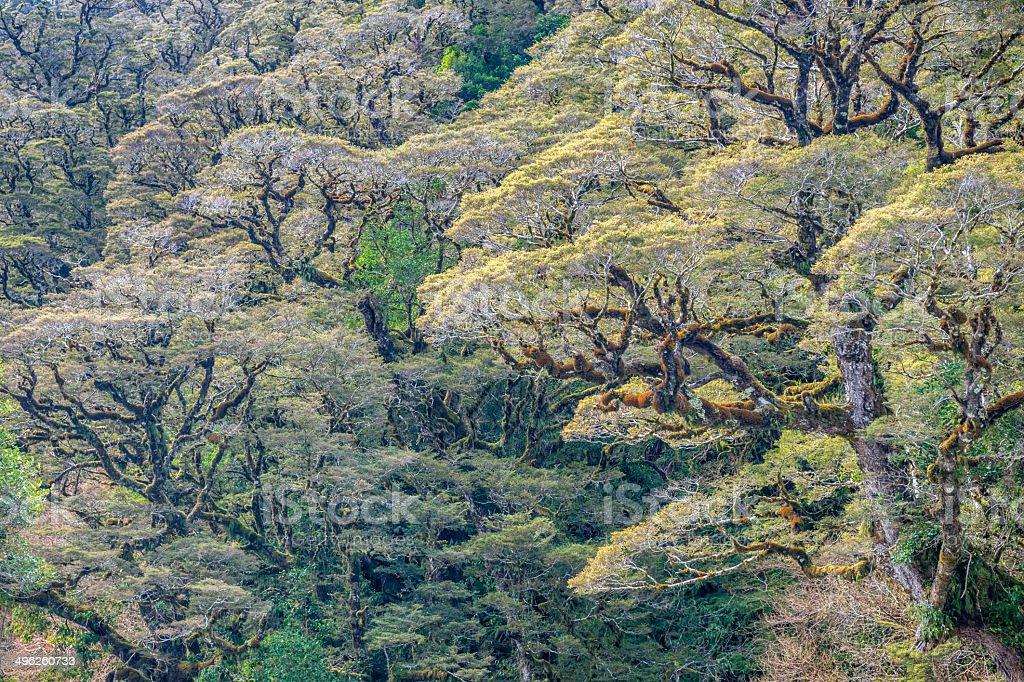 Bäume Hintergrund, Milford Sound, Neuseeland – Foto