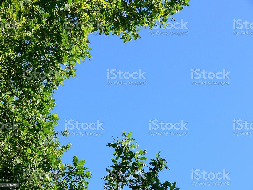 Tree tops frame royalty-free stock photo