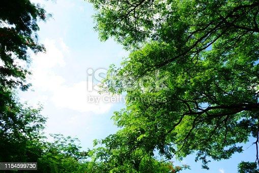 Springtime, Summer, Tree, Forest, Woodland