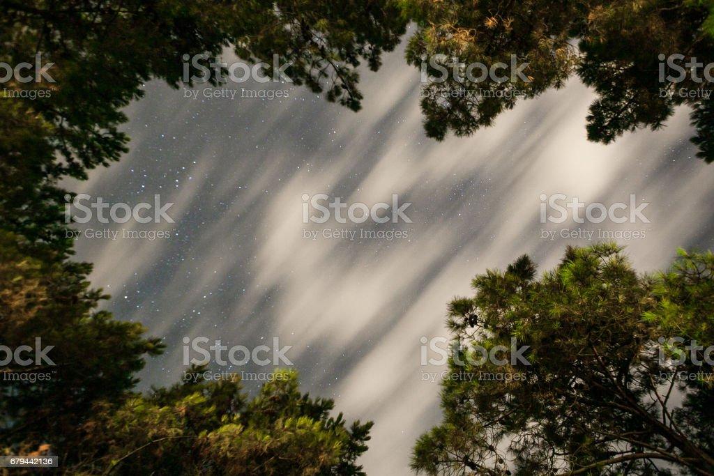 tree tops from bottom foto de stock royalty-free