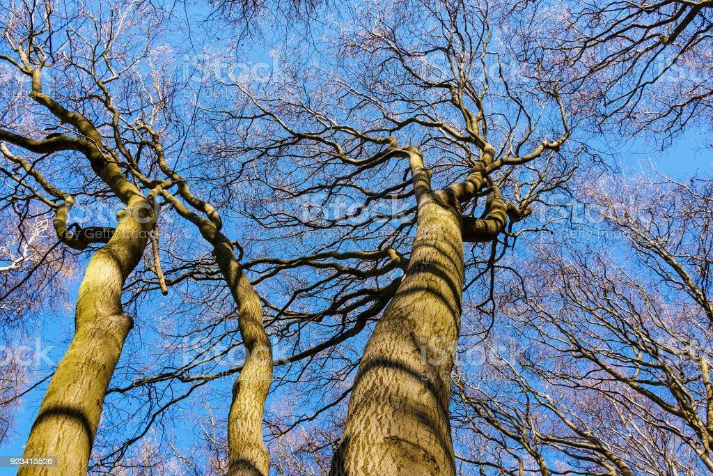 Baumkronen im Wald bei blauem Himmel – Foto