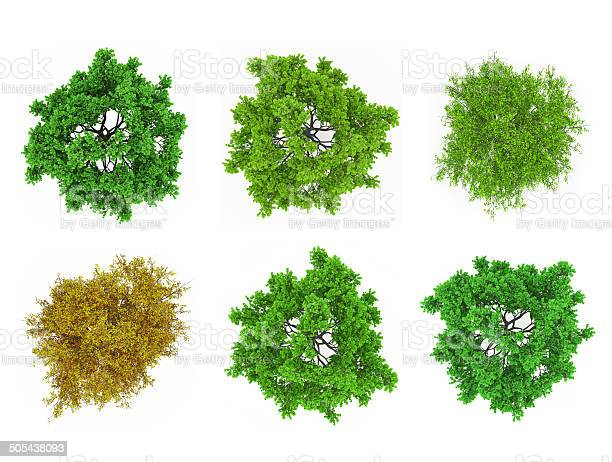 Photo of Tree tops isolated