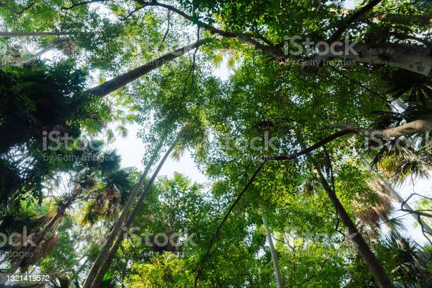 Photo of Tree tops, photo up to the tree top shot from below.