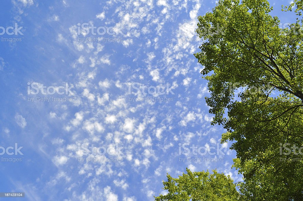 Tree Tops royalty-free stock photo