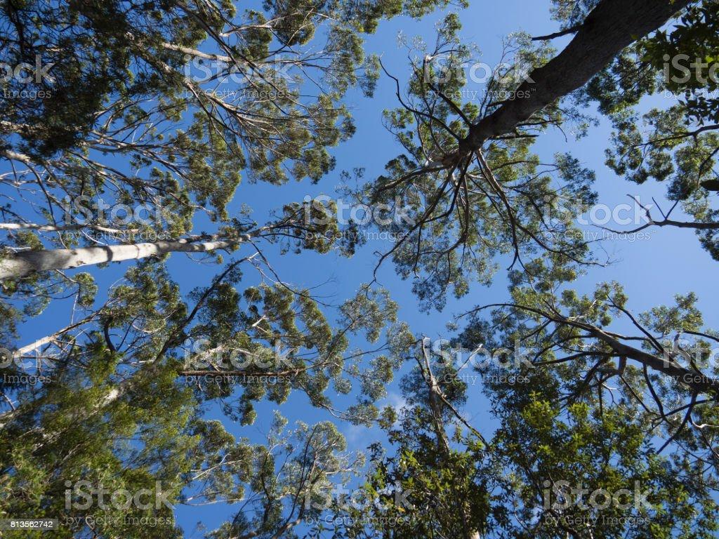Tree Tops Stock Photo - Download Image Now - iStock