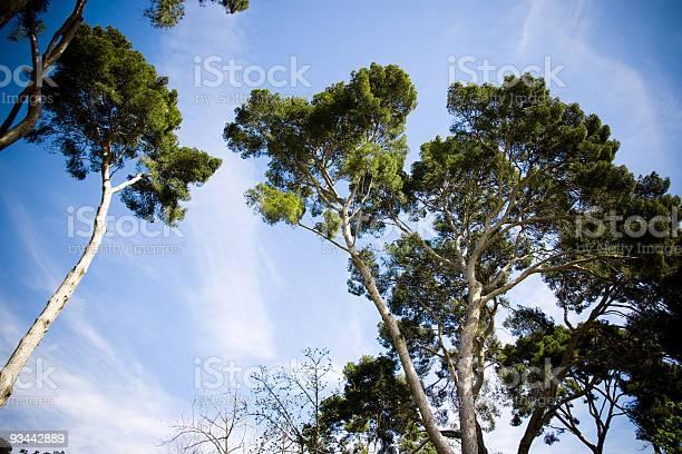 Photo of Tree tops