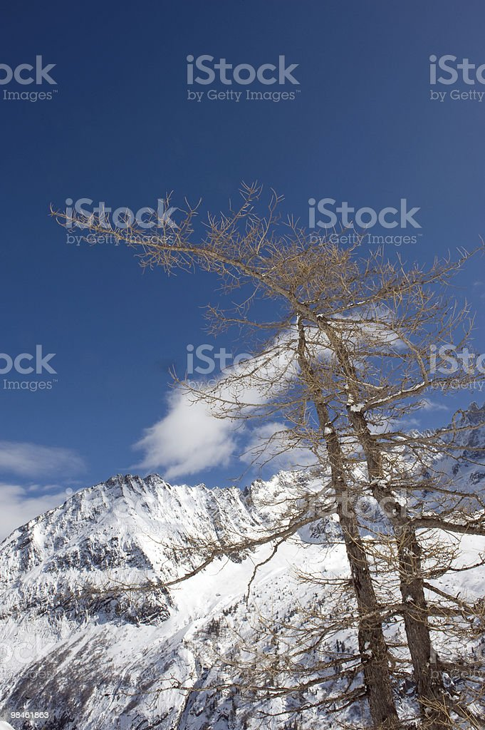 Tree towards the blue sky royalty-free stock photo