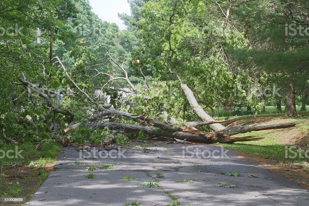 Tree Travel Hazard stock photo