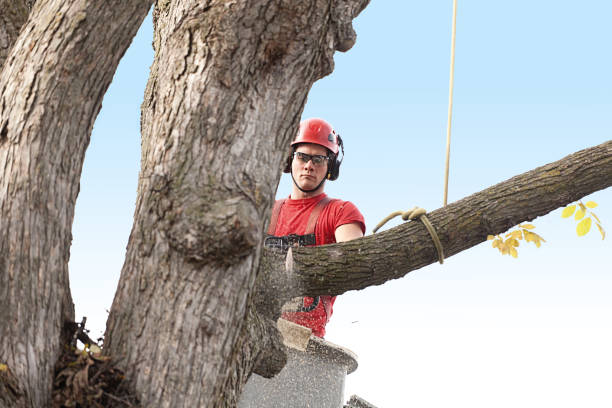 tree trimming arborist working in elevated bucket pruning tree with chainsaw - tree surgeon stock photos and pictures