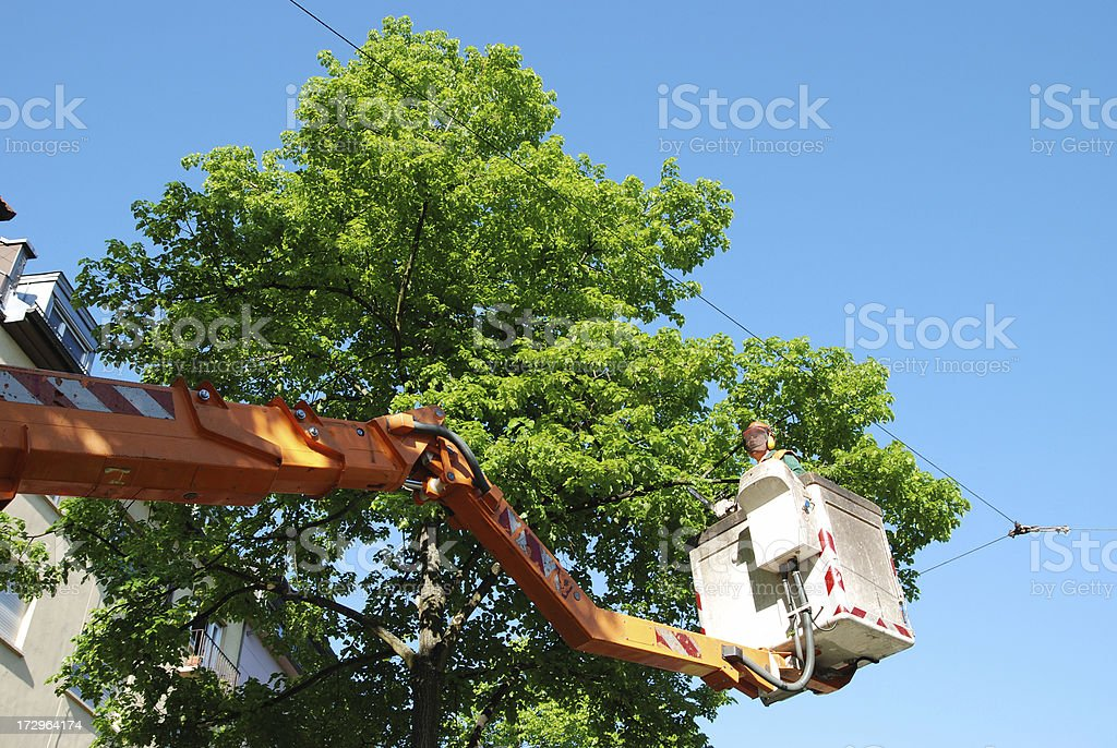 Tree trimming royalty-free stock photo