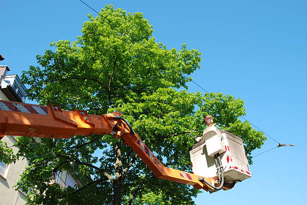 tree trimming - tree surgeon stock photos and pictures