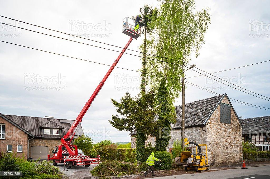 Tree trimming stock photo