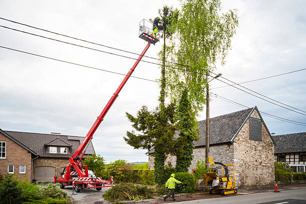 Tree trimming Professionals at work, trimming a large tree by use of a telescopic platform truck and wood shredder machine.  hedge clippers stock pictures, royalty-free photos & images