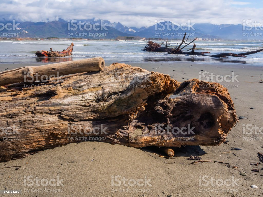 Tree trunk abandoned along the beach - foto stock