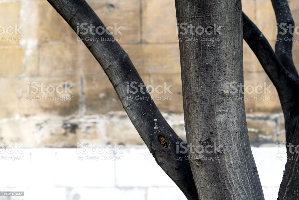 Tree Trunk Abstract and Wall stock photo