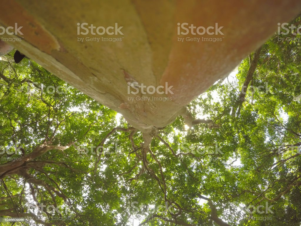 Tree, trunk and leaves stock photo