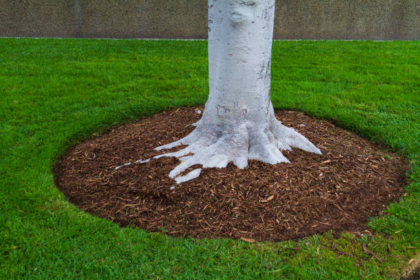 Tree trunk base with mulch and green grass stock photo