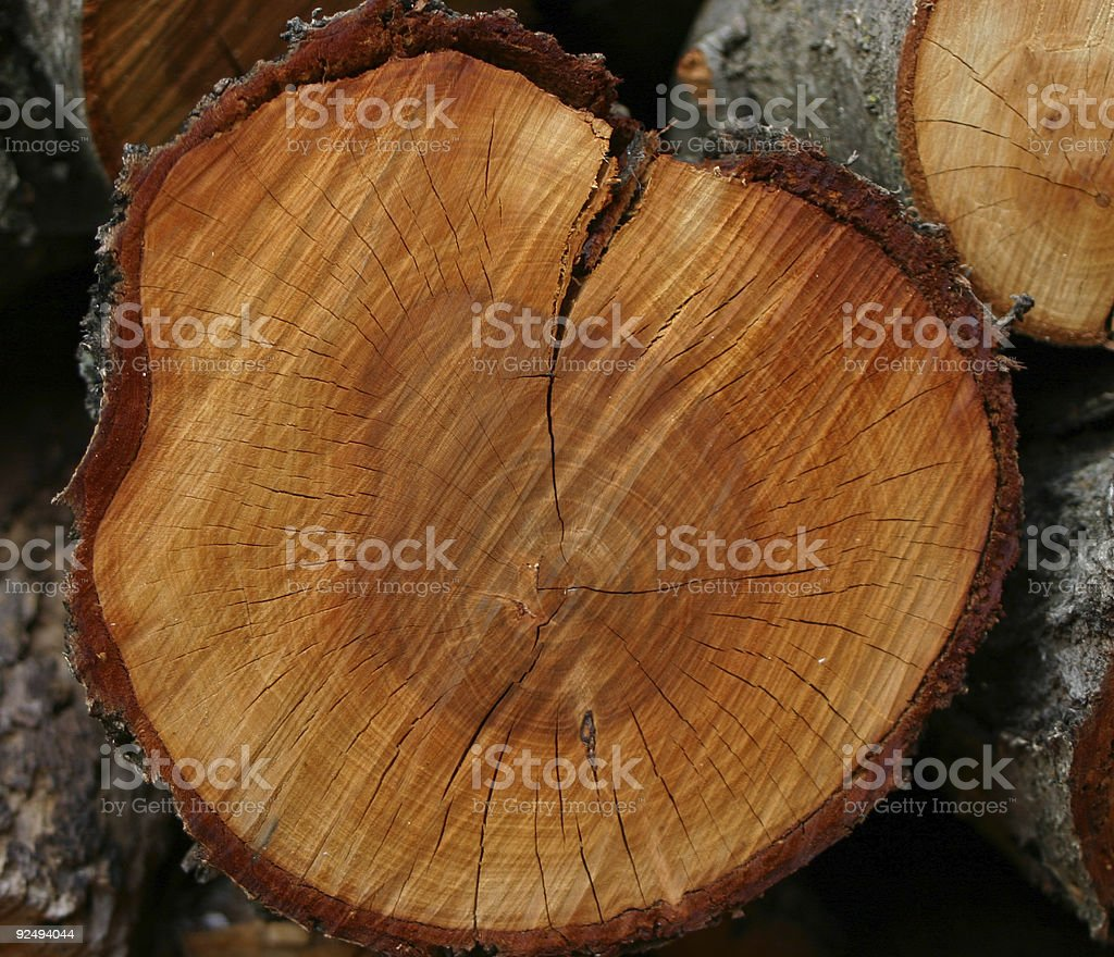Tree trunk chopped into log firewood royalty-free stock photo