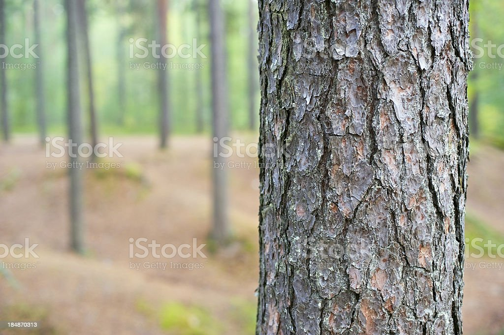 Tree trunk detail stock photo