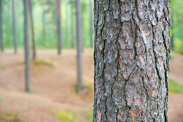 tree trunk detail - fur bildbanksfoton och bilder