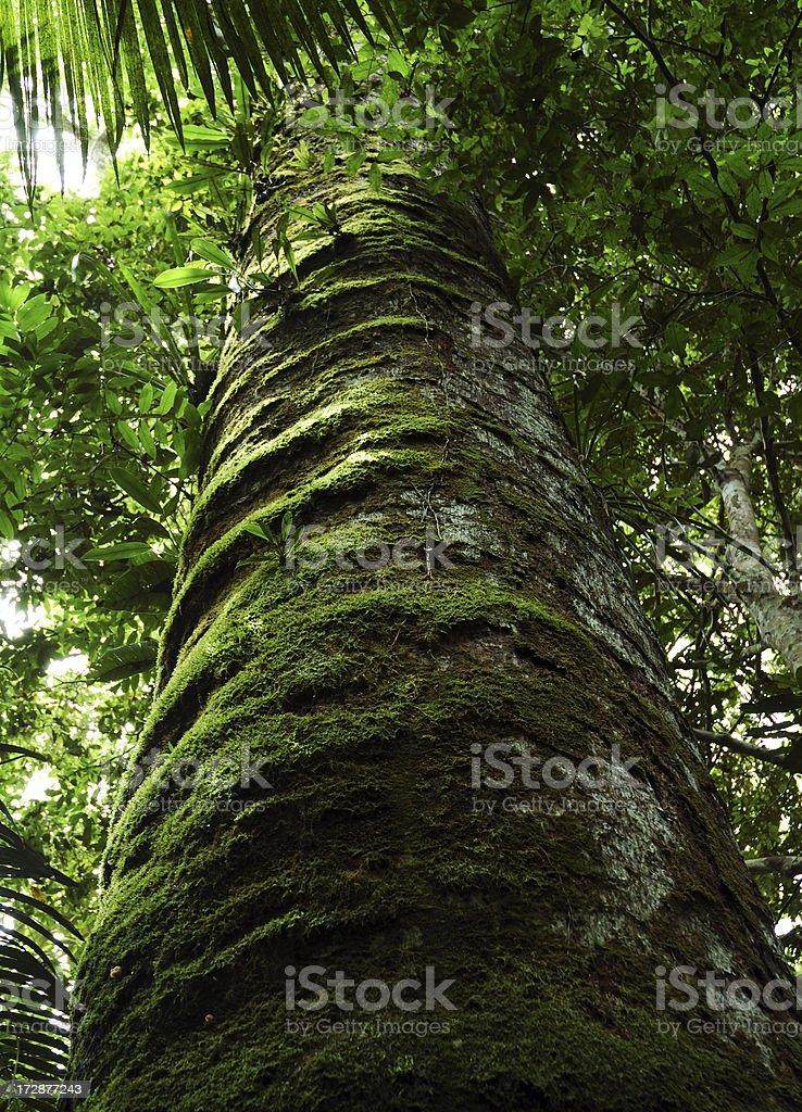 Tree Trunk in Amazon stock photo