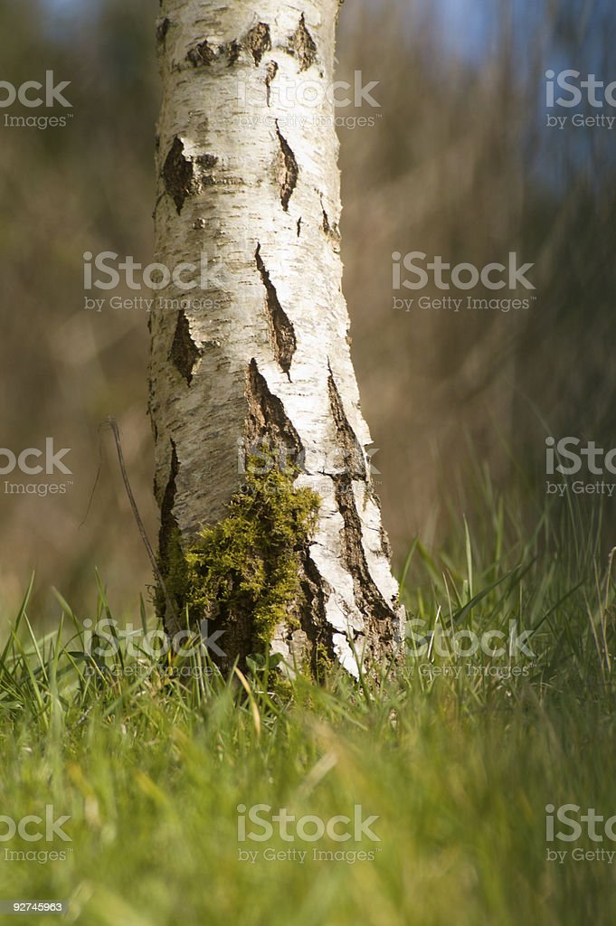 Tree trunk in summer grass royalty-free stock photo