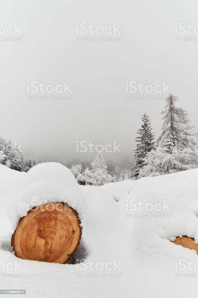 Tree trunk in the snow stock photo