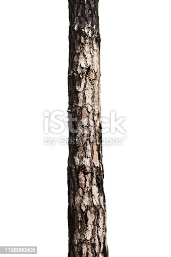 istock Tree Trunk Isolated On White Background. For Copy Space, Arrows ,Signs, Signposts and Directions 1156080506