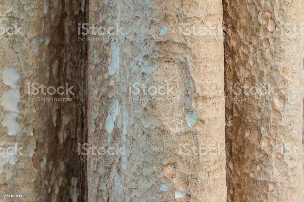 Tree trunk. May use as a background. Closeup stock photo
