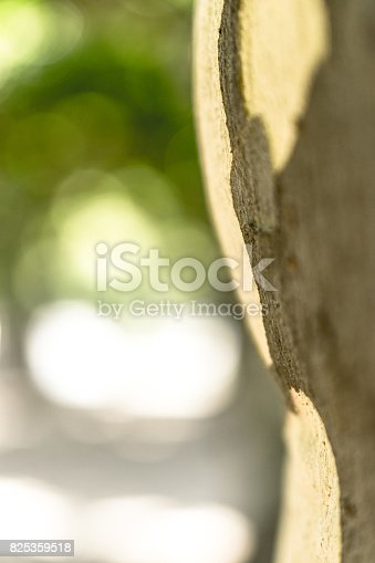 641254964 istock photo Tree trunk on natural bokeh green background 825359518