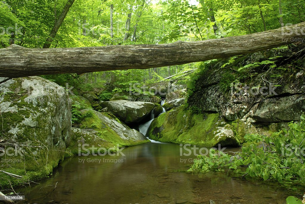 Tree Trunk over Creek royalty-free stock photo