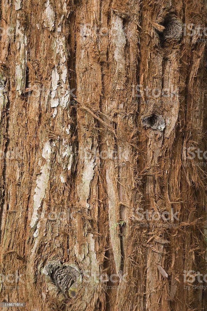 Tree Trunk stock photo