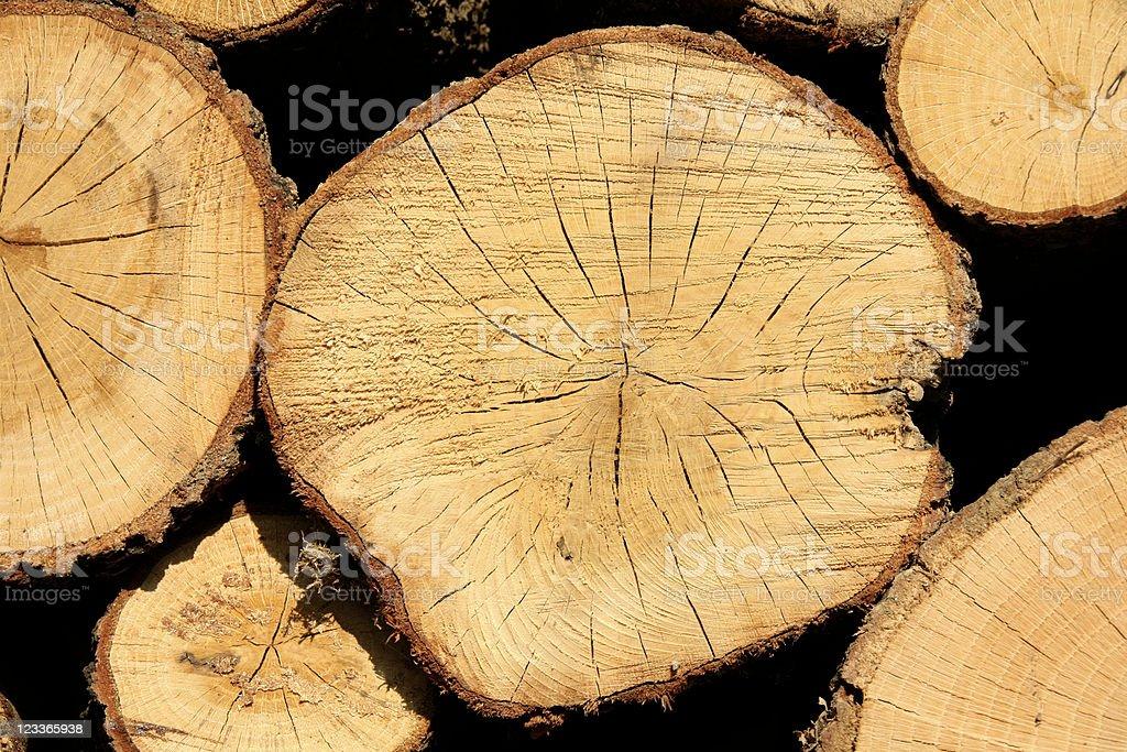 tree trunk royalty-free stock photo