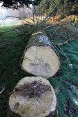 istock Tree trunk 1311081209
