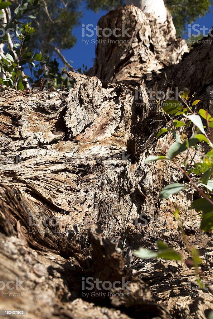 Tronco de árvore foto royalty-free