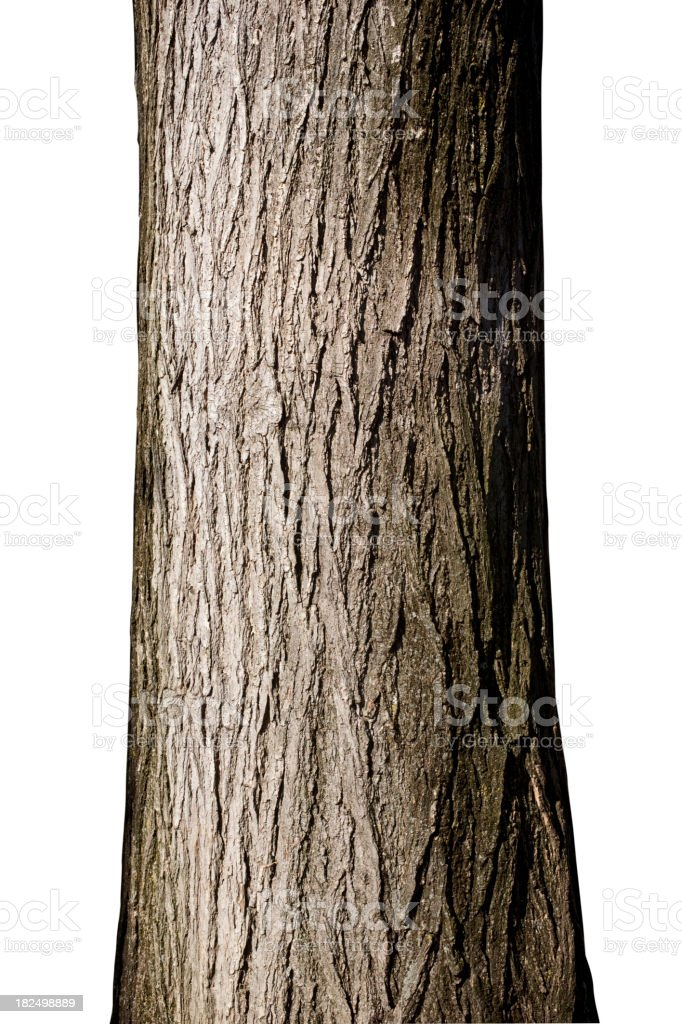 Tree trunk stock photo