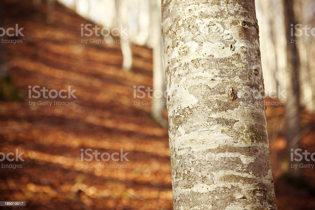 Tree trunk – Foto