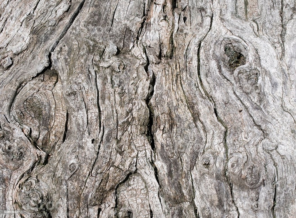 tree trunk  Lizenzfreies stock-foto