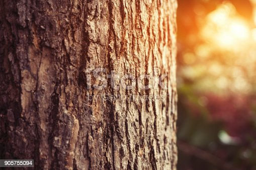 Close up tree trunk in forest