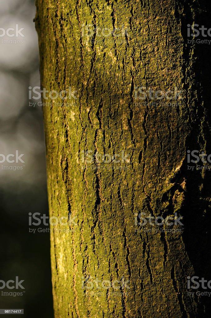 나무줄기 royalty-free 스톡 사진