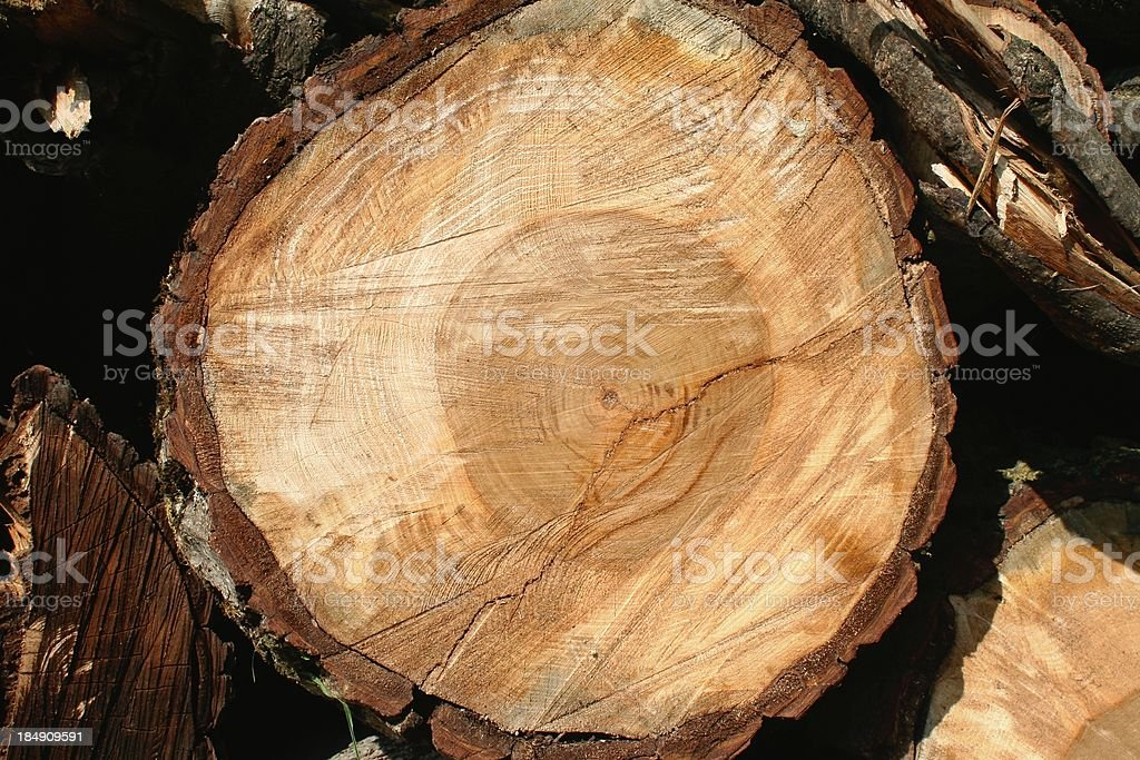 Tree trunk section stock photo