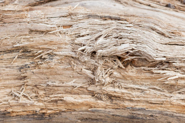 Tree trunk stripped of bark background or texture Tree trunk stripped of bark background or texture. disjointed stock pictures, royalty-free photos & images