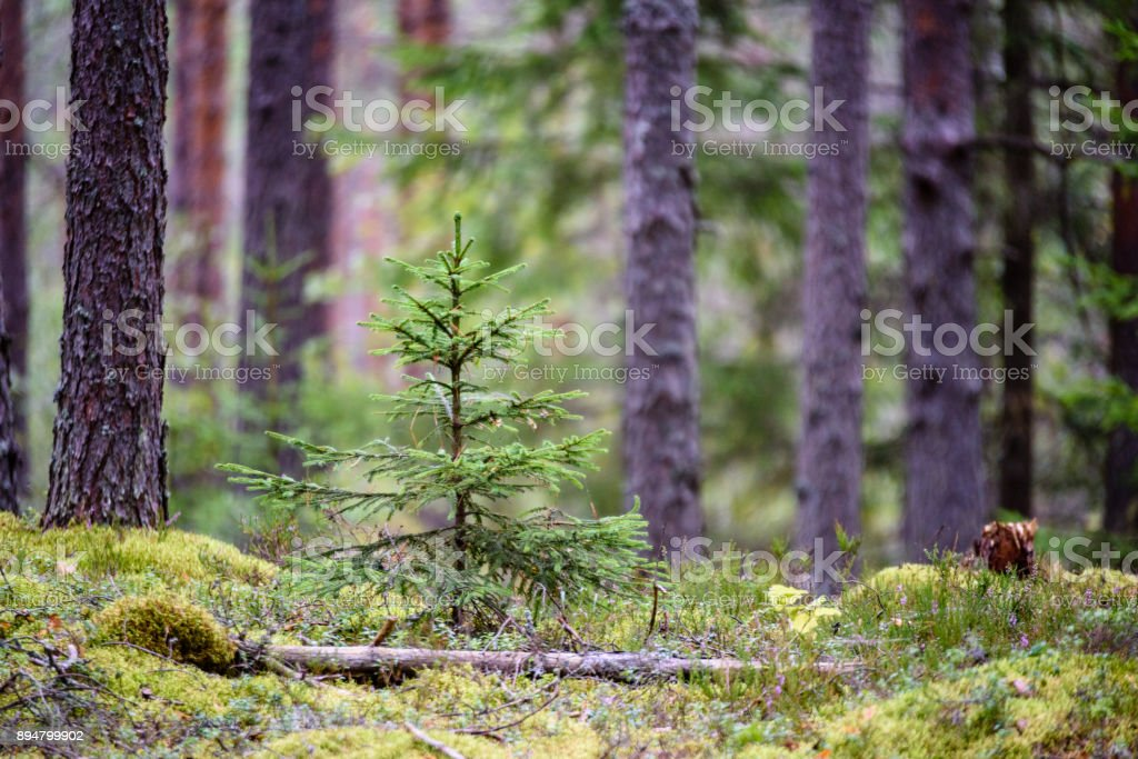 tree trunk textures in natural environment stock photo