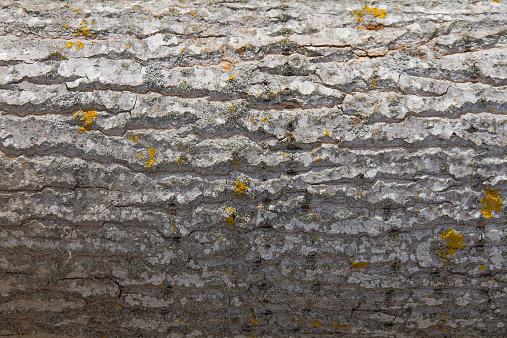 Tree Trunk - Tronco de Arbol