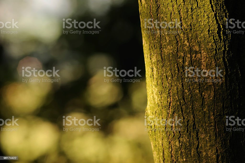 Tree Trunk with Bokeh Background royalty-free stock photo