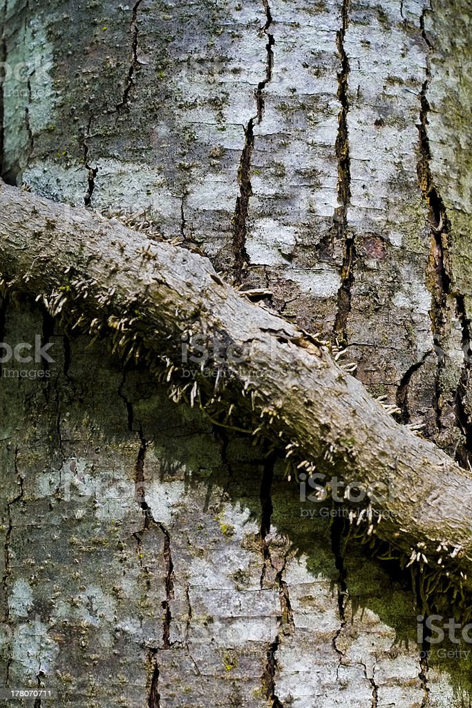 Tree trunk with branch stranded around, Arco, Trento, Italy royalty-free stock photo