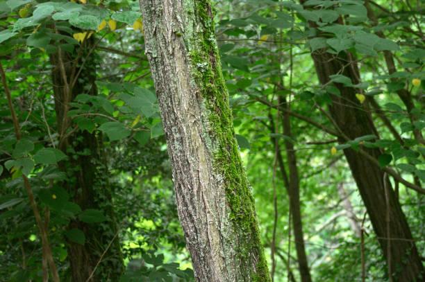 tronco de árbol con musgo con vegetación de fondo - foto de stock
