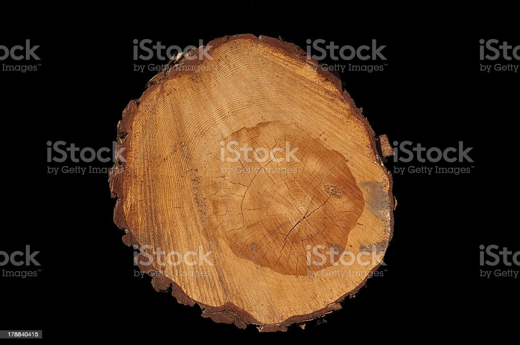 Tree trunk, yearrings isolated on black stock photo