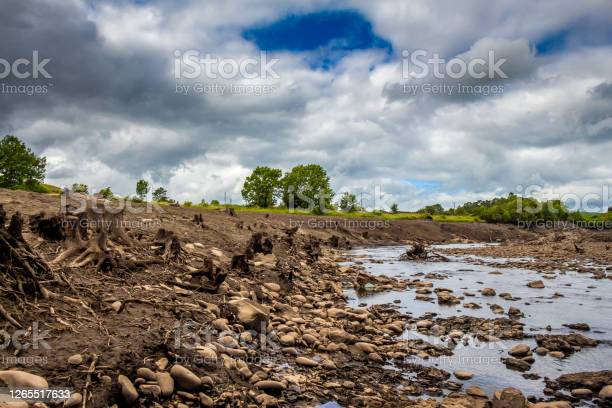 Photo of Tree trunks exposed from the former river bank in the drained Earlstoun Dam